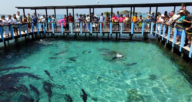 Sitios turisticos en Cartagena - Vida diurna en Cartagena Acuario de San Martin