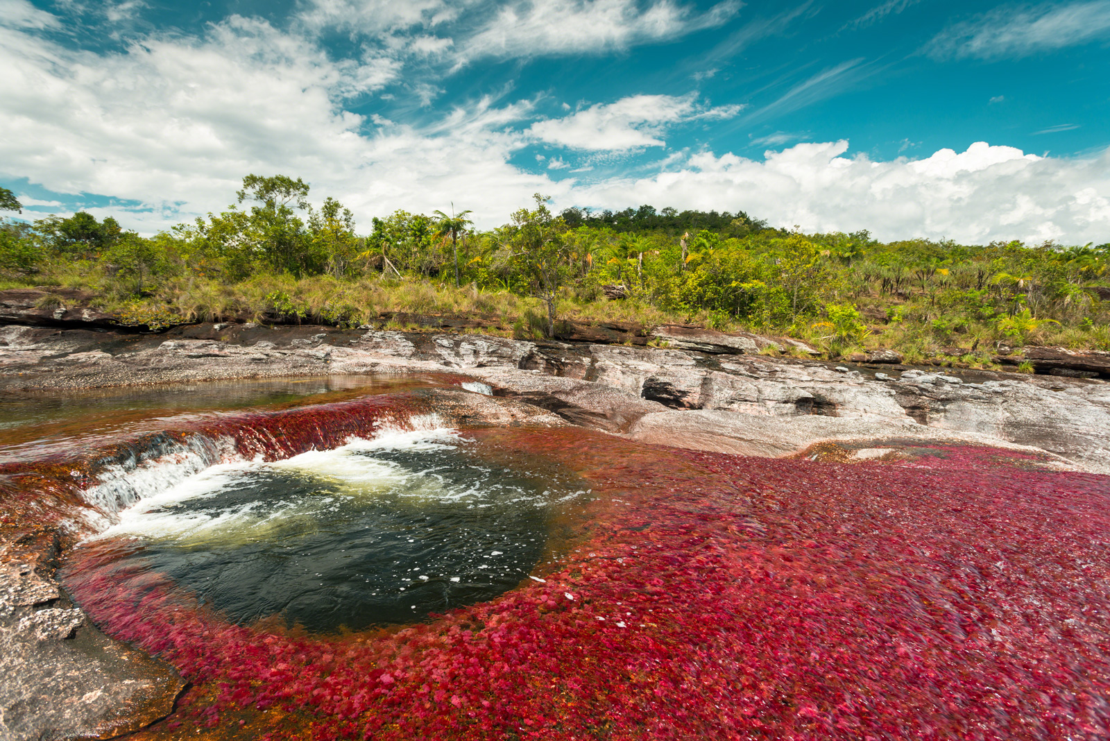 Caño Cristales, hermoso río de Cinco Colores